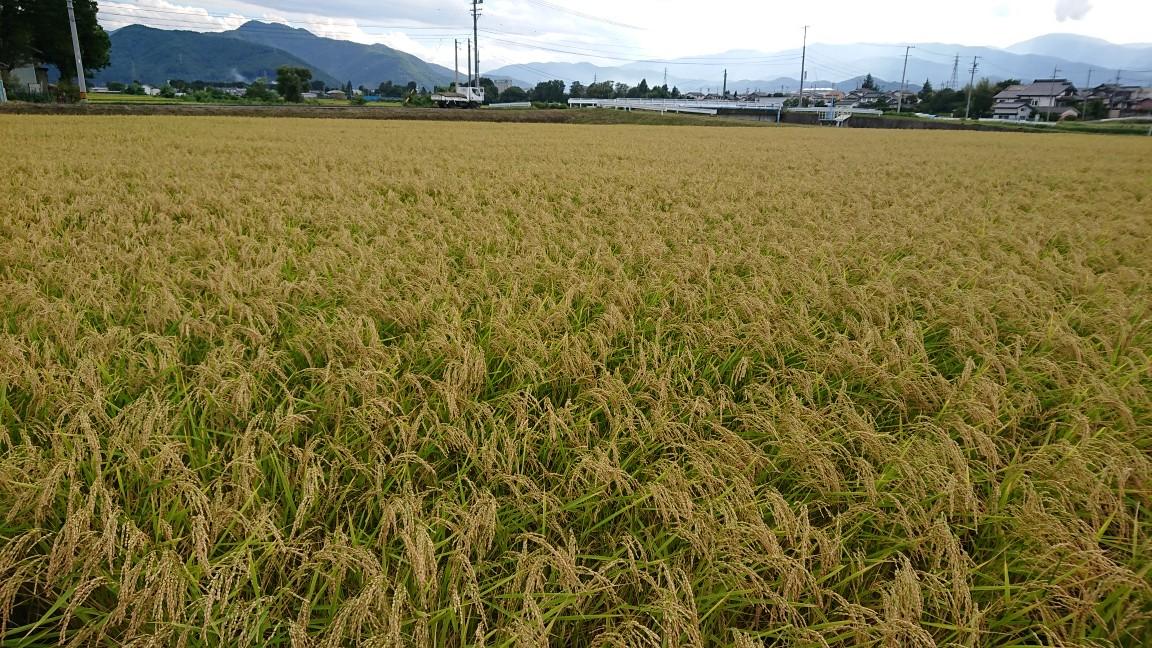 今年の米作り・収穫も近づいてきた。