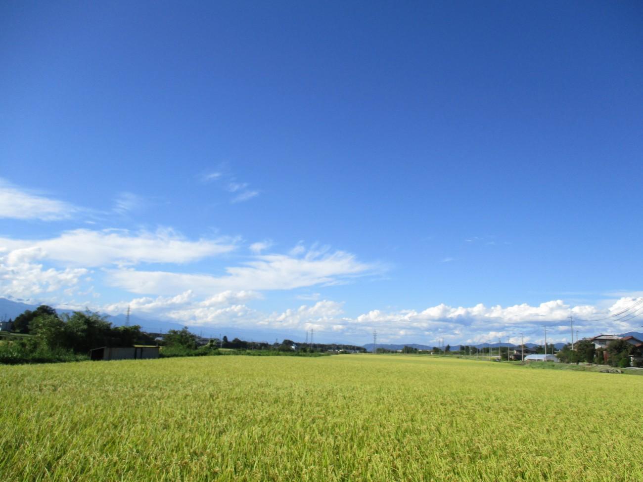 今年の米作り・稲刈り。