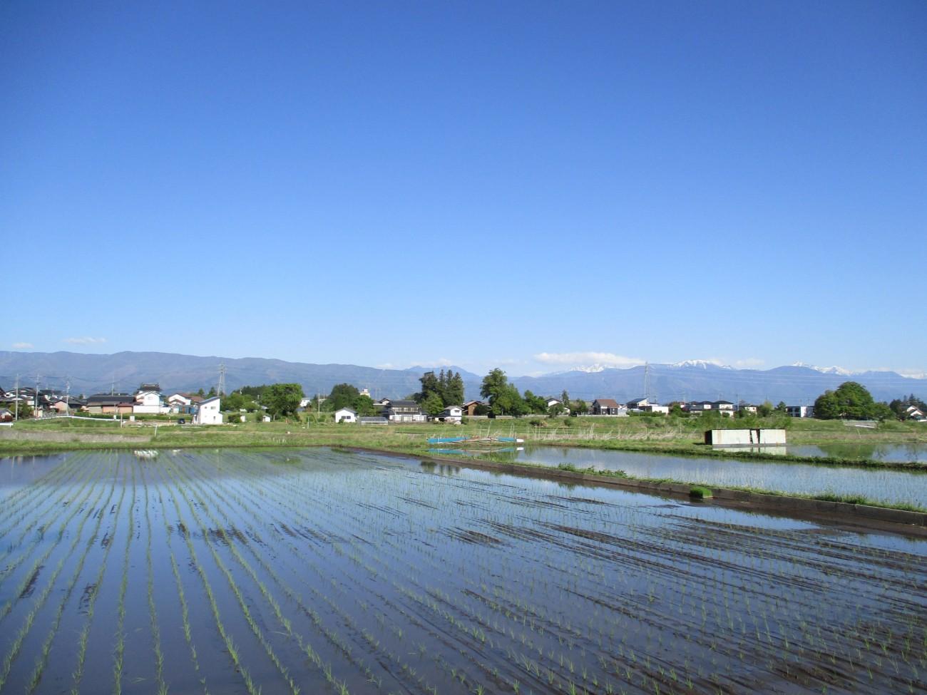 緑香村・美山錦の田植えをしました。